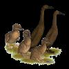 Chocolate Runner Duck Family Ornament (Round)