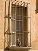 Italy, Parma. A tabby cat in a