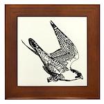 Peregrine Sketch Framed Tile