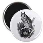 Long-eared Owl Sketch Magnet