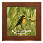 Little Bee-eater Framed Tile