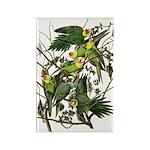 Audubon's Carolina Parakeet Rectangle Magnet