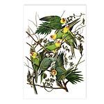 Carolina Parakeet Postcards (Package of 8)