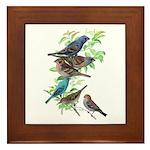 Grosbeaks & Buntings Framed Tile