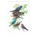 Grosbeaks & Buntings Postcards (Package of 8)