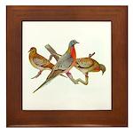 Fuertes' Passenger Pigeon Framed Tile