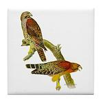 Red-shouldered Hawk Tile Coaster