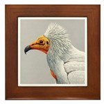 Fuertes' Egyptian Vulture Framed Tile