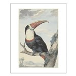 Schouman's White-throated Toucan Small Poster