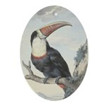 Schouman's White-throated Toucan Ornament (Oval)