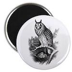 Long-eared Owl Sketch Magnet