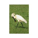 Eurasian Spoonbill Rectangle Magnet