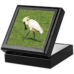 Eurasian Spoonbill Keepsake Box
