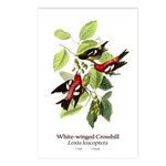White-winged Crossbill Postcards (Package of 8)
