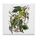 Audubon's Carolina Parakeet Tile Coaster