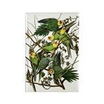 Audubon's Carolina Parakeet Rectangle Magnet