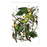 Carolina Parakeet Postcards (Package of 8)