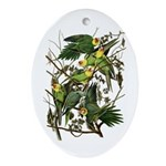 Audubon's Carolina Parakeet Oval Ornament