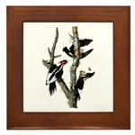 Ivory-billed Woodpecker Framed Tile
