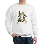 Fuertes' Waxwings Sweatshirt
