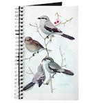 Fuertes' Shrikes Journal