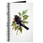 Rose-breasted Grosbeak Journal