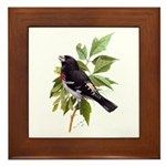 Rose-breasted Grosbeak Framed Tile