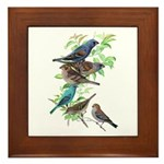 Grosbeaks & Buntings Framed Tile