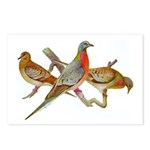 Fuertes' Passenger Pigeon Postcards (Package of 8)