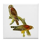 Red-shouldered Hawk Tile Coaster