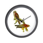 Red-shouldered Hawk Wall Clock