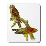 Red-shouldered Hawk Mousepad