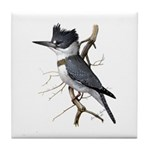 Fuertes' Kingfisher Tile Coaster
