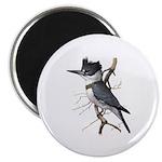 Fuertes' Kingfisher Magnet