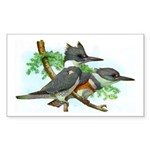 Belted Kingfisher Rectangle Sticker